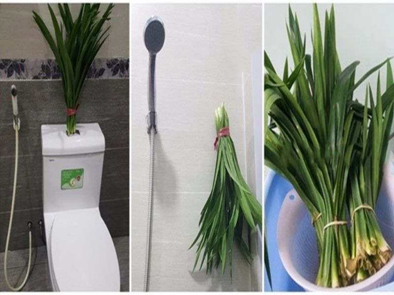 Cách khử mùi hôi trong phòng vệ sinh
