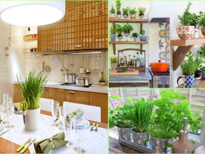 Khử mùi nhà bếp hiệu quả bằng cây xanh trong góc bếp