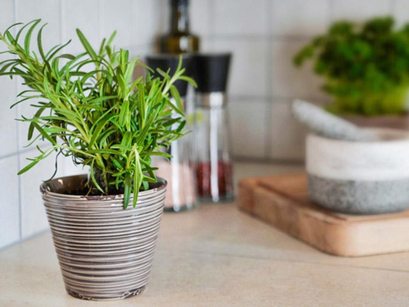 Đặt cây cảnh ở các góc phòng để khử mùi khói cháy trong nhà